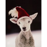 Kristin Nicholas Designs Lamb Holiday Cards